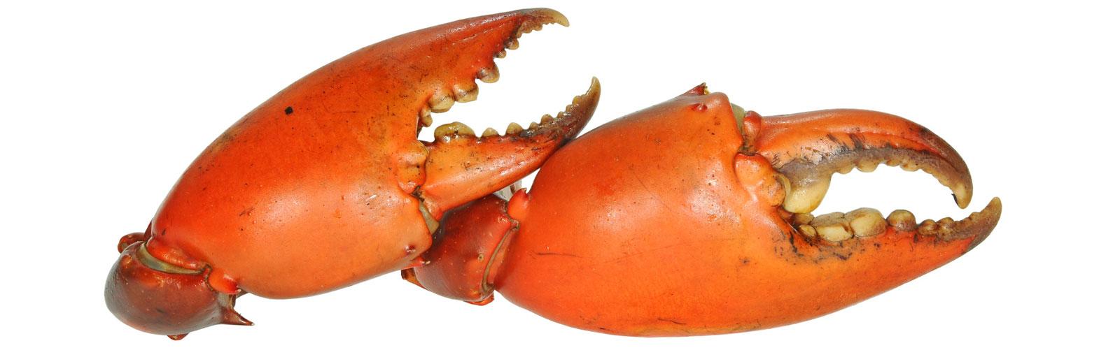 Venta de bocas de cangrejo congeladas - distribuidor bocas de cangrejo - comprar bocas de cangrejo